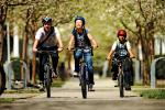 3 bicyclists on road with trees